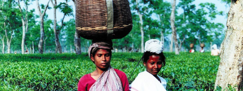 Assam, pluckers with basket
