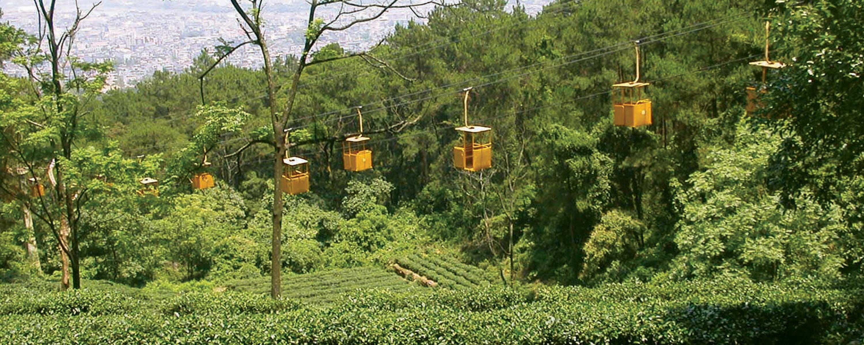 Tea Lift