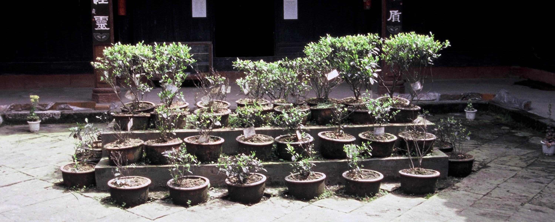Tea Museum Meng Ding