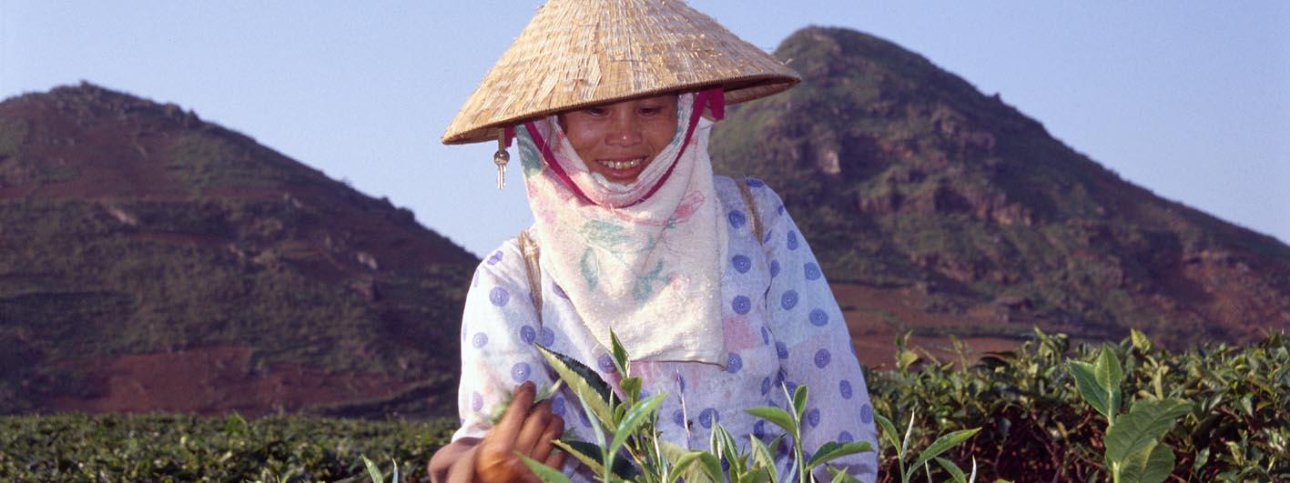 teabud vietnam