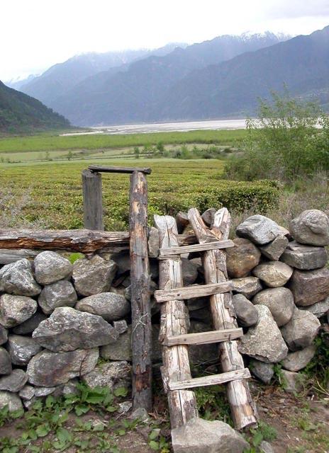 Tea Plantations Tibet